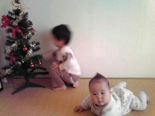 クリスマス 畝.jpg