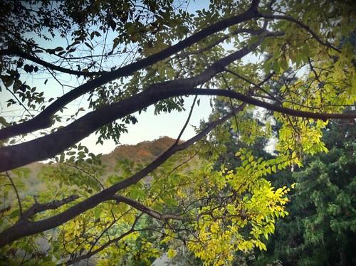 Autumn Sky 1