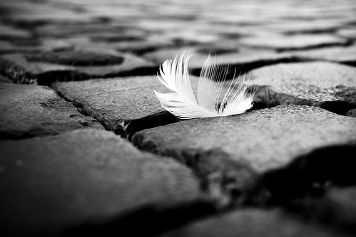 a feather of an angel