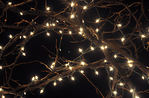 Day 324 - Twinkling Lights by Tim Bungert