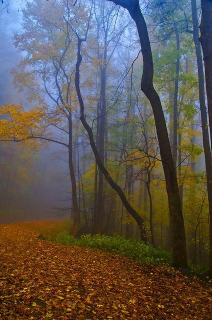 Newfound Gap Road in mist
