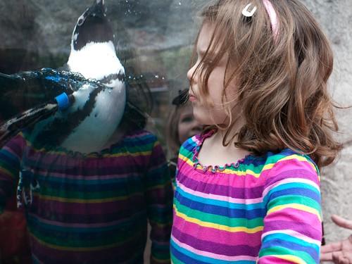 Penguin, up close