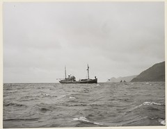 Returning to Australia, the Wyatt Earp called in at Macquarie Island, where naval LST 3501 had landed a unit of the Australian National Antarctic Research Expedition for a winter stay, c. 1950s