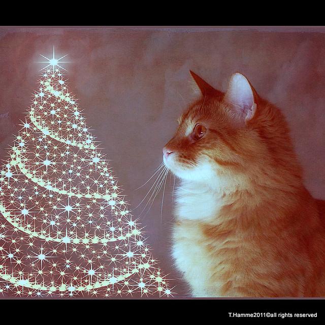 I Pray on Christmas ~~~~~~~