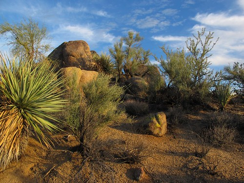 november light wild arizona southwest nature landscape outdoors rocks afternoon shadows desert granite remote exploration discovery yucca plantlife outthere ephedra mohavecounty mormontea zoniedude1 canonpowershotg11 earthnaturelife poachierange ecosystemoverlap sunsetrockgarden