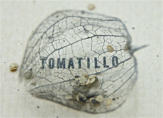 Tomatillo 4