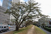 Embankment of the Tama River in Futako-tamagawa by ykanazawa1999