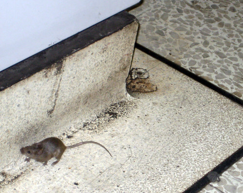 Tube Mouse - Guess Where Tube?