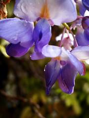 Victorian Garden_7