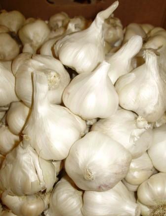 Garlic!