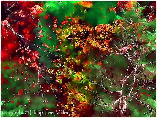 autumn painterly nature leaves landscape vermont abstractart fallfoliage quecheegorge topazclean topazadjust maplestrees