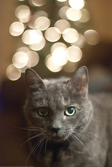 Fluffy with Christmas light bokeh - final