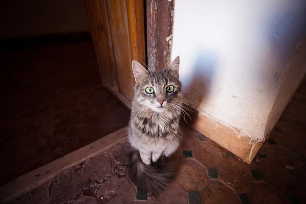 Maroc 2011 - Chat - Ouarzazate