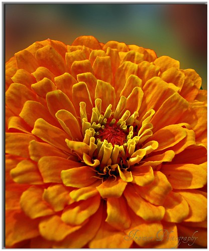 An Orange Beauty~ by Enjoy the journey...Not the Destination~