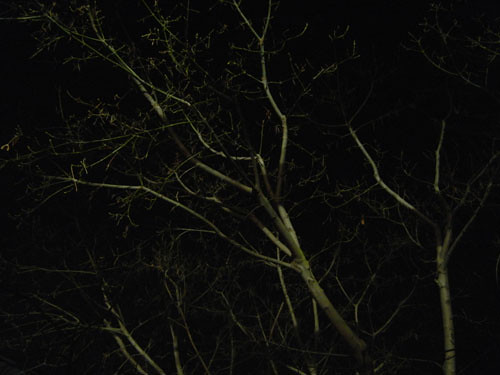 Trees at Night _ 9264