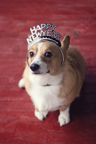 Happy New Year, from Sookie! by Make Way For Cupcakes