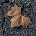Leaf on Asphalt