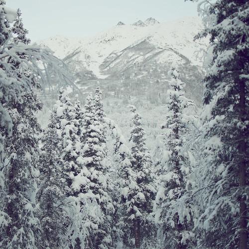 無料写真素材, 自然風景, 樹木, 森林, 雪