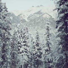 [Free Images] Nature, Trees, Forest, Snow ID:201201100000