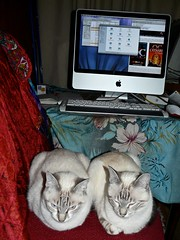 2 cats on strike ... we've had enough of that Mac!