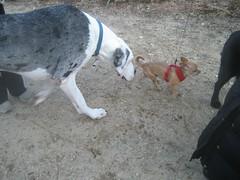 street dog(0.0), animal(1.0), dog(1.0), pet(1.0), mammal(1.0), pointer(1.0),