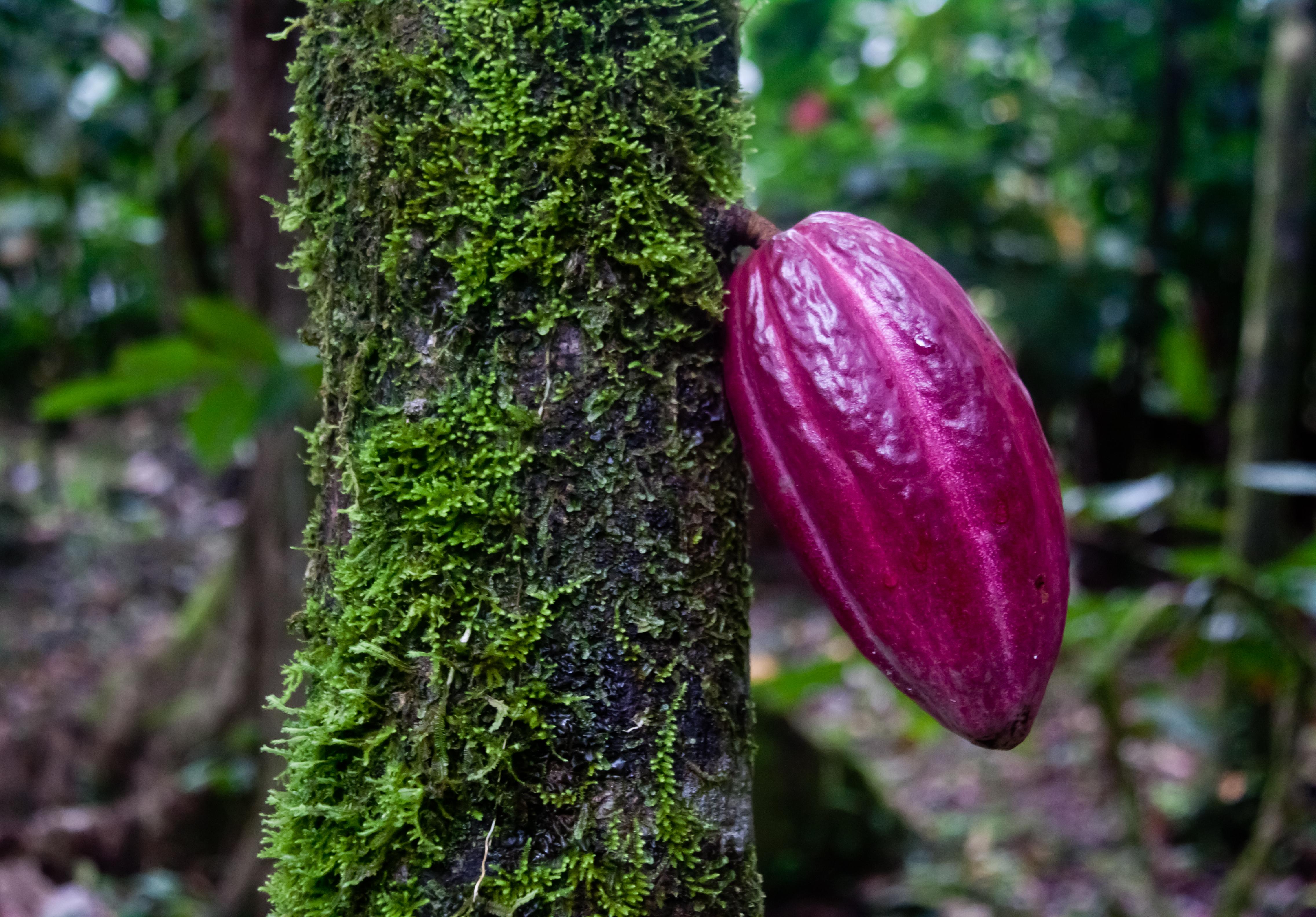 Room photo 1747786 La Loma Jungle Lodge and Chocolate Farm
