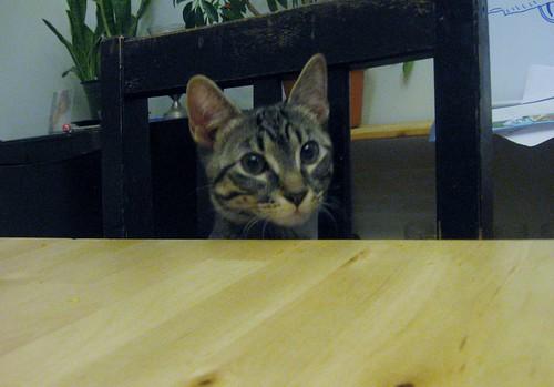 Nita's blog Jan 2012 010