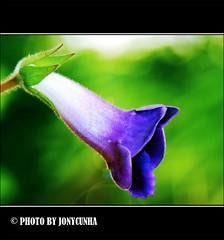 O AMOR É UMA FLOR DELICADA - Love is a delicate flower