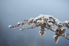 winter flowers 020