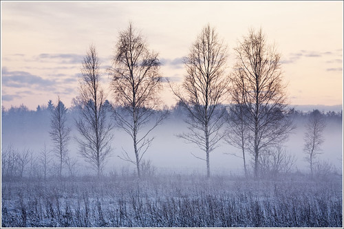 20120101. First day of the New Year. The fog. 1382. by Tiina Gill