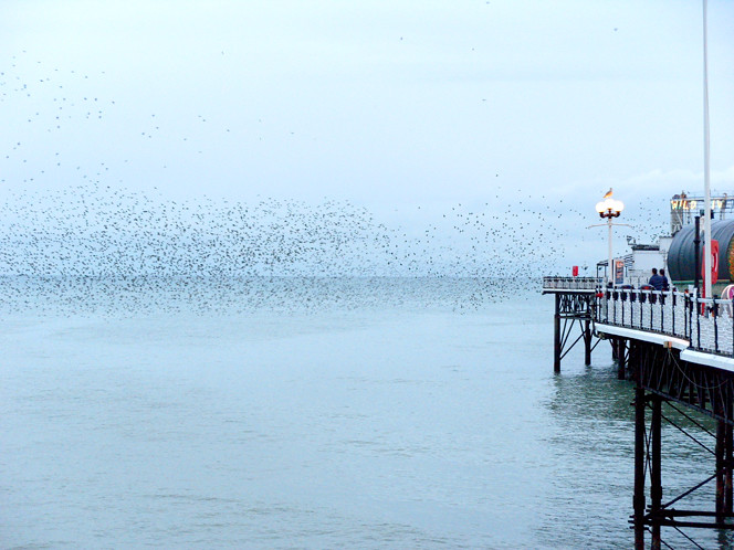 Magical Starlings Brighton