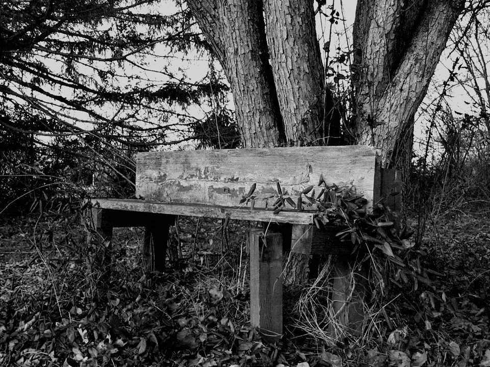 Bench behind abandoned house