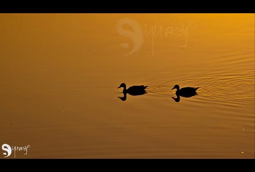 sunrise pics peepin hws yuvraj pethkar teamhws thecch yuvrajsp peepinpics yuvrajpethkar