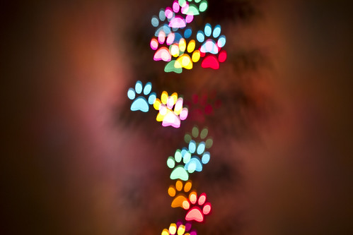The Spohrs Are Multiplying Photography Shaped Bokeh