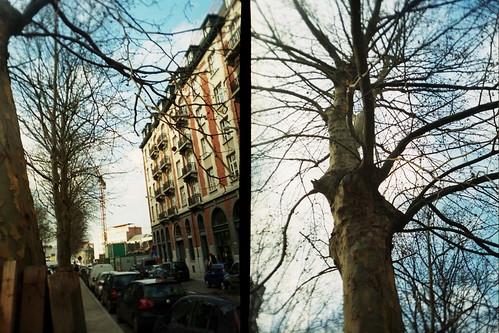 ***tree*