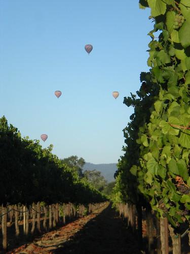 Luna Vineyards Morning