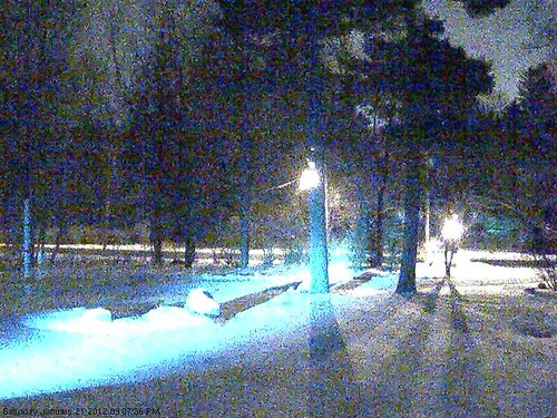 camera light red ny nature station video wildlife surveillance upstate fox network hid server axis networkattachedstorage nas mammalia vixen pittsford carnivora chordata redfoxes canidae vulpes synology ds211 m1054