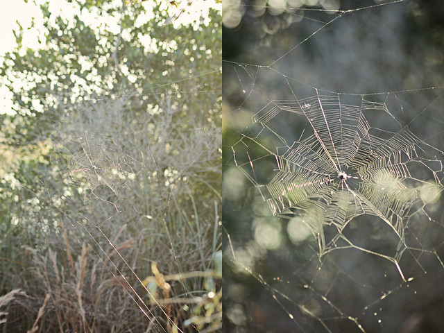 Chapel Trail preserve 9 diptych