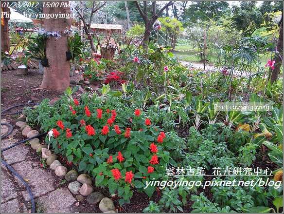 雲林古坑_花卉研究中心20120123_R0050654