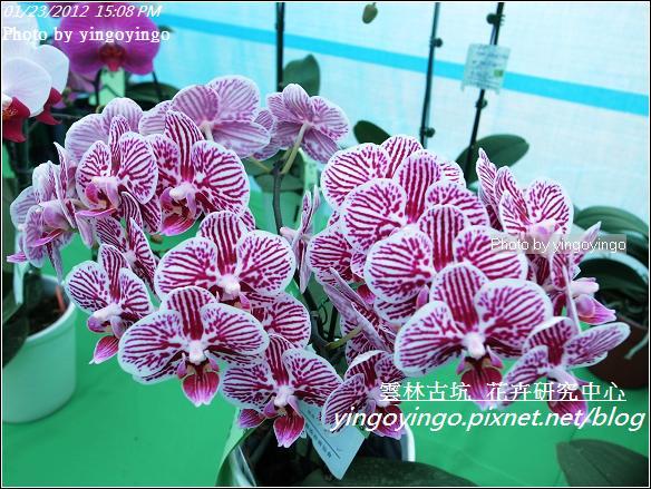 雲林古坑_花卉研究中心20120123_R0050673