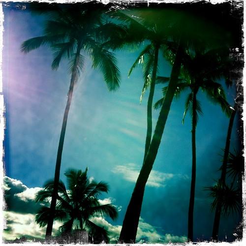 Hawaii34