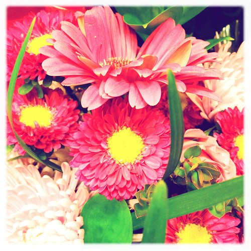 26/366: Flowers