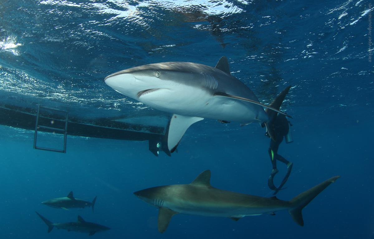 2012.01.12-2012.01.26_dive_safari_[cuba]-diving-007