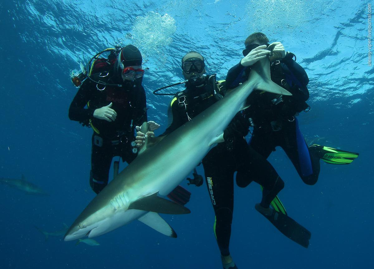 2012.01.12-2012.01.26_dive_safari_[cuba]-diving-009