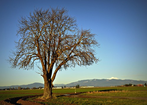 02-03-12 Blue Sky on a Winter Day by roswellsgirl