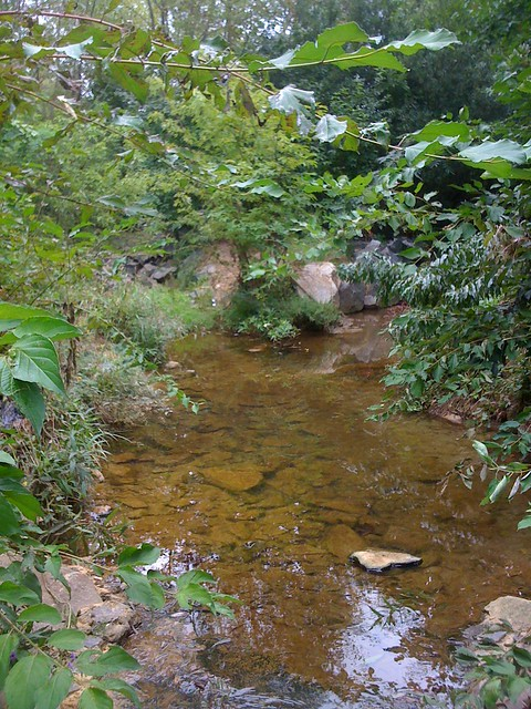 Edwards Branch stream restoration