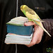 Bird Picking Fortune - Shiraz, Iran