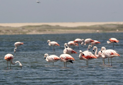 Playa Manglares de San Pedro de Vice - Sechura (Piura)