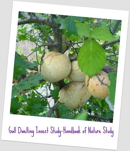 Gall Study - Handbook of Nature Study