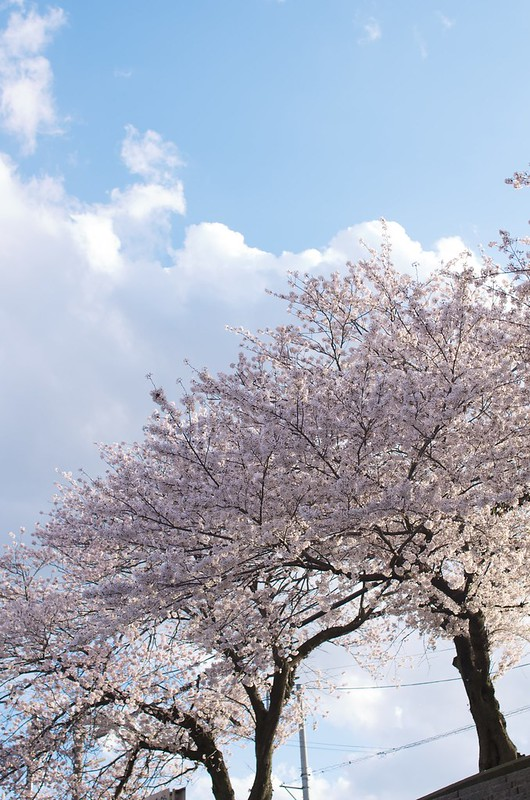 2014-04-05 16-28-37 - _IGP8024